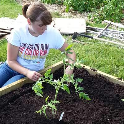 Kathryn Olson plants tomatoes.