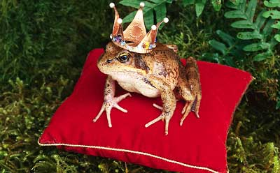 Photo of a frog wearing a crown
