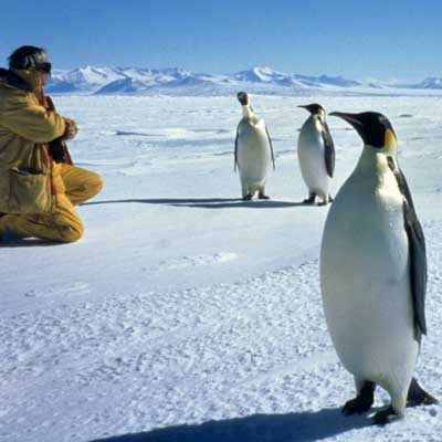 A photo of penguins interacting with curious visitors in Antarctica.