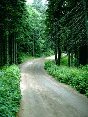 Photo of a dirt road winding through the woods