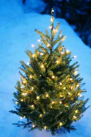 Photo of an evergreen covered in white lights during a snowy winter night