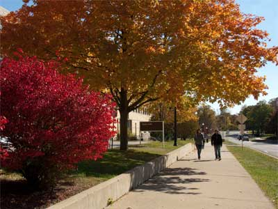 Trees with colorful autumn leaves line Normal Road on campus.