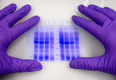 Photo of purple-gloved hands conducting a scientific experiment.