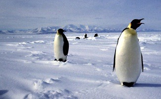 The Antarctic locals.
