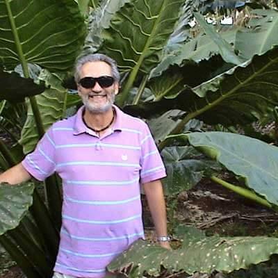 Giovanni Bennardo standing amid a kape plant, or giant taro, in Tonga.