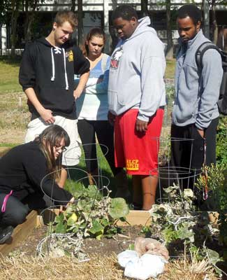 Students visit the Huskie Service Scholars Community Garden.