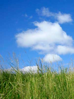 Photo of green grass, blue sky and white puffy clouds