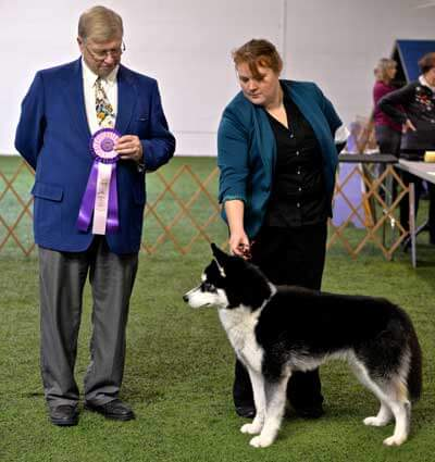 Mission and Lisa Monge, one of his owners, receive a ribbon for reserve best in show.