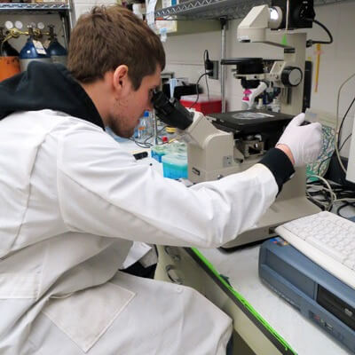 Biological Sciences major Zachary Howard works in Barrie Bode's lab as a Research Rookie.