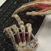 Skeleton-Keyboard-400x400