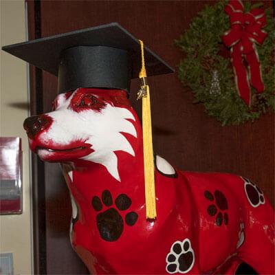 Huskie statue with graduation cap