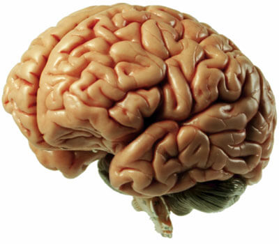 Photo of a brain