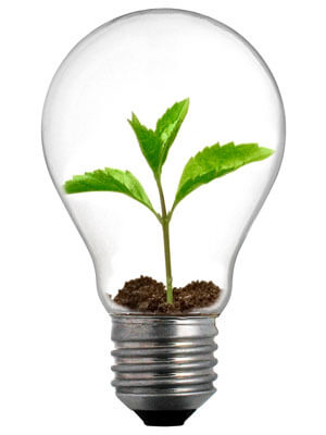 Photo of a lightbult with a plant inside