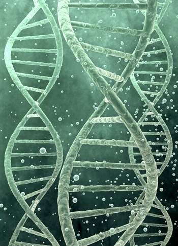 Reading the genetic blueprint niu today is the day coming when knowledge of the genetics behind human diseases will point the way to cures malvernweather Choice Image