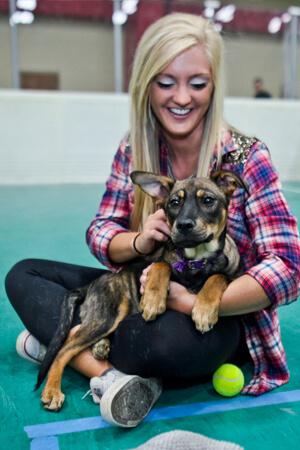 finals-dogs-homepage-portrait